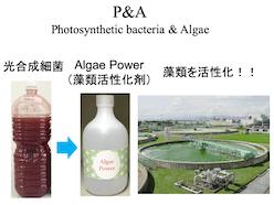 P&A(Photosynthetic bacteria & Algae)